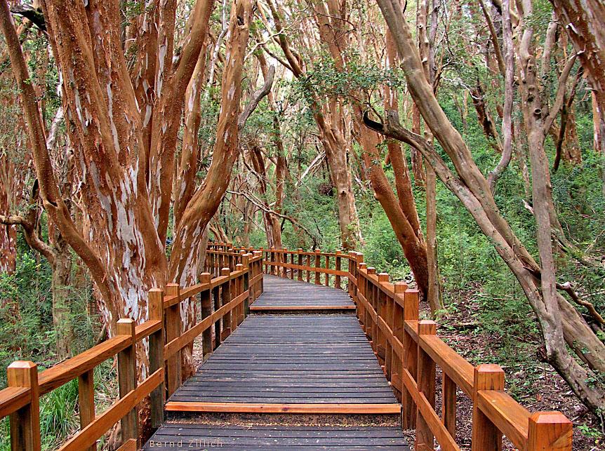 BOSQUE DE ARRAYANES EN VILLA LA ANGOSTURA, Bosque de Arrayanes Villa La Angostura